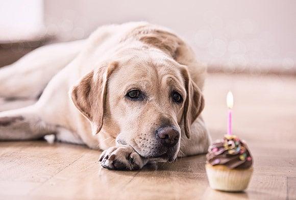 Câți ani are câinele tău în anii umani? O nouă formula de calcul vă poate surprinde!